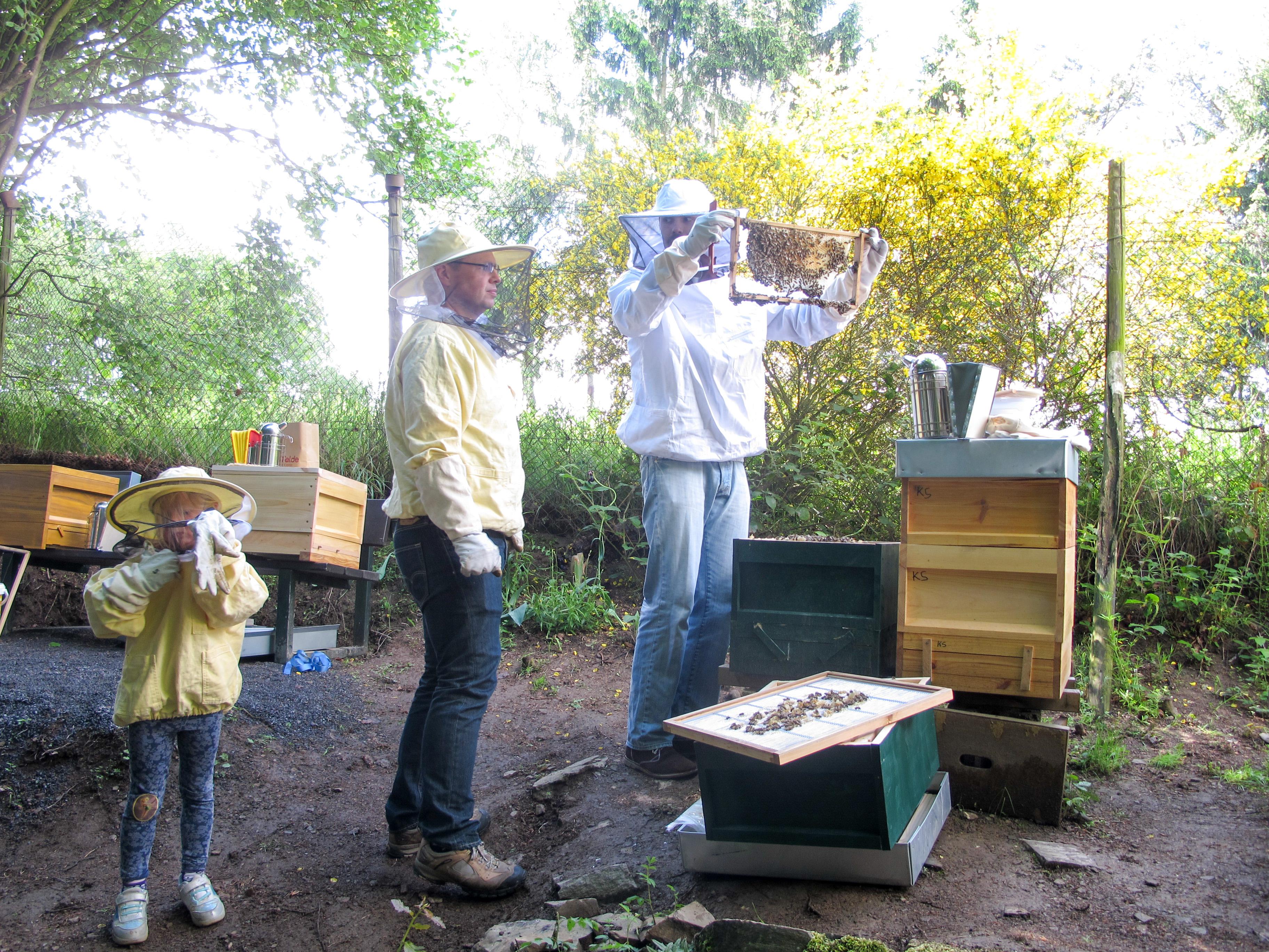 Endlich Ableger! – Bienen